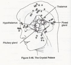 It's said that when the pineal gland is activated it becomes illuminated like a thousands suns. The sense of white light flowing within and without may be when the pineal gland is highly activated producing DMT type chemistry during the height of the peak.