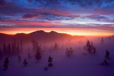 Ghosts of the Tundra -- Rocky Mountains, CO by Light of the Wild, via Flickr