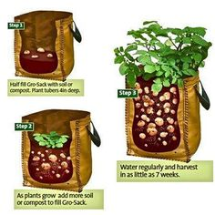 Have to try potatoes again, previous attemp were not even remotely successful. -- Homestead Survivalist: Growing Potatoes In Containers