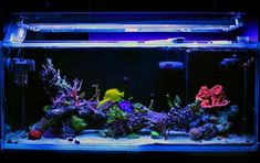 Choosing the right spot in your house for your new in-home aquarium is crucial for the health of your fish. So, what is a good place to place your tank in your living room? Whether you're buying a small or large fish tank, we give you some practical ideas on the best place to keep it. And what about Feng shui aquariums? Read this guide for the full lowdown on best fish tank placement! #fishtankwhere #bestaquariumplace Acrylic Aquarium, Coral Reef Aquarium, Home Aquarium, Aquarium Design, Large Fish Tanks, Cool Fish Tanks, Tropical Fish Tanks, Saltwater Tank, Saltwater Aquarium