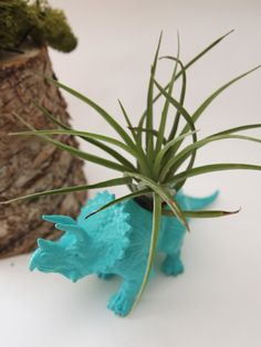 Small turquoise colour Dinosaur Planter with Air Plant Included ~~!!!  Perfect…