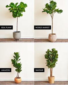 The Best Faux Fiddle Leaf Fig Tree | Apartment Therapy