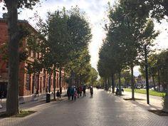 Toulouse, França. Foto: NiKi Verdot   1001 Dicas de Viagem
