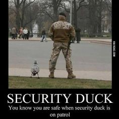 Security duck reporting for duty! - http://limk.com/news/security-duck-reporting-for-duty-291376305/