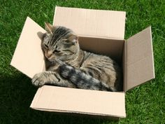 It seems there's more to cats and boxes than 'If it fits, I sits.' Researchers have discovered the stress-lowering properties of enclosed cardboard spaces.