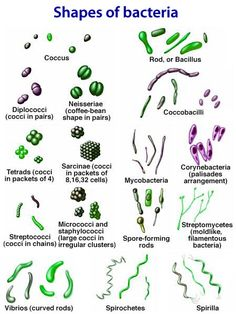 Shapes and arrangements of Bacteria (prokaryotes) (Vet Tech Week) Medical Laboratory Science, Science Biology, Life Science, Forensic Science, Teaching Biology, Computer Science, Medizinisches Labor, E Mc2, Veterinary Medicine