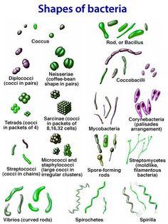 Shapes and arrangements of Bacteria (prokaryotes)