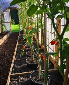 "Obtain great ideas on ""greenhouse plans homemade"". They are offered for you on our website. Veg Garden, Vegetable Garden Design, Fruit Garden, Backyard Greenhouse, Greenhouse Plans, Backyard Landscaping, Greenhouse Wedding, Growing Plants, Growing Vegetables"