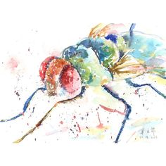 Print  the daring fly  watercolor illustration by TheLittleFloret, $22.00