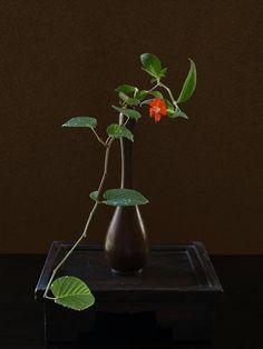 Ikebana Asian style flower arrangement 暑さぶり返す
