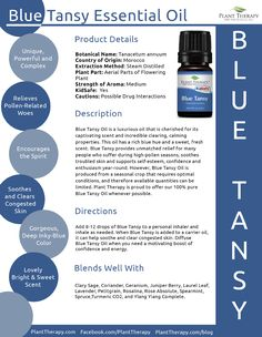 Blue Tansy Essential Oil features a captivating scent, calming properties, and gorgeous color. Buy Plant Therapy's Blue Tansy today, quantities are limited! Blue Tansy Essential Oil, Patchouli Essential Oil, Essential Oil Uses, Doterra Essential Oils, Blue Tansy Oil, Yarrow Plant, Plant Therapy Essential Oils, Young Living Oils, Essential Oils