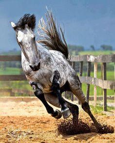 C'è qualcosa nell'esteriorità di un cavallo che si attaglia all'interiorità di un uomo. (Sir W. Churchill)