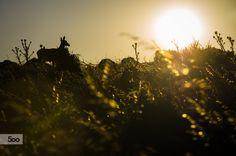 Sunset on Mnt. Parnitha by Apostolos Mantzouranis on 500px