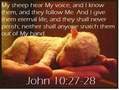 my sheep hear my voice & I know them, and they follow me. And I give them eternal life, and they shall never perish; neither shall anyone snatch them out of my hand.