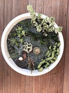 Sukkulenten - mein runder Garten | marinamia.de