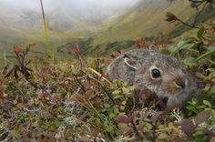 【枯葉】秋の動物画像を貼っていく:ハムスター速報