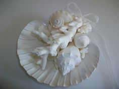 Shells and coral home decor