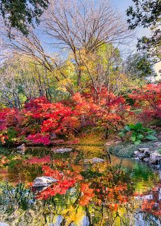 Fall Foliage in the Japanese Gardens in Ft. Worth, Texas