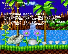 Twenty Incredible Hedgehog Facts That Will Astound You Hedgehog Facts, Sonic The Hedgehog, Introductory Paragraph, Mind Blown, The Twenties, Thinking Of You, Funny Memes, The Incredibles, Pickles