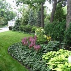 flowerbed around tree - plants growing in middle of pachysandra bed  -