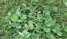Spot treat with Weed B Gone Max for southern lawns. Also Weed & Feed in spring.