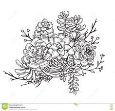 Stock vector vector illustration of hand drawn succulent for Powers tattoos mcallen tx