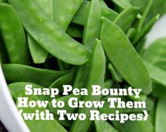 Snap Pea Bounty {with Two Recipes} | Small Footprint Family