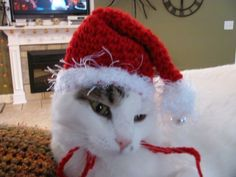 Red Christmas Santa Claus Pet Hat for Dogs and Cats Handmade Crochet | DefiantCreations - Pets on ArtFire