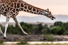 Some of the most incredible nature photography you'll ever see...
