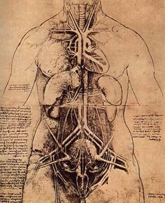 Leonardo da Vinci was certainly an astonishingly talented man but not everyone thought him so. Indeed many only saw Leonardo da Vinci the heretic. Leonard De Vinci Inventions, Da Vinci Inventions, Anatomy Art, Anatomy Drawing, Body Anatomy, Human Anatomy, Greys Anatomy, Leonardo Da Vinci Pinturas, Michelangelo