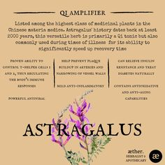 astragalus benefits, herbal medicine, apothecary, plant medicine Holistic Medicine, Natural Medicine, Herbal Medicine, Natural Cures, Natural Healing, Mineral Food, Shaman Woman, Holistic Approach To Health, Herbs For Health