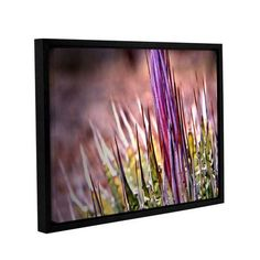 """ArtWall Agave by Mark Ross Framed Photographic Print Size: 36"""" H x 48"""" W"""