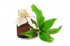 Z kalísie můžeme připravit léčivou tinkturu. Plants, Alcohol, Plant, Planets