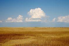 Painting the Prairie | EMILIE LEE