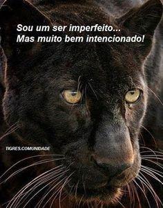 Jaguar. Google+