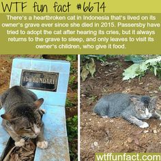Heartbroken cat refused to leave its owner's grave - WTF fun fact