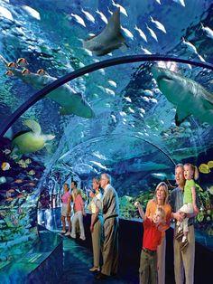 Ripleys? Aquarium of Canada. This brand new $130 million aquarium ...