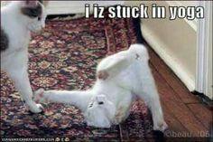 Kitty Humor