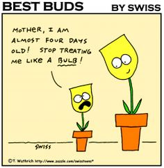 Tulip bulb #garden #humor - Best Buds Gardening Cartoon fridge magnets by Swisstoons
