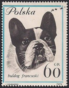 French Bulldog Polish Stamp