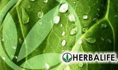 Herbalife realmente ha hecho un nombre por sí misma como una empresa. Ellos han construido un negocio de marketing multinivel internacional y el producto es distribuido por personas independientes. Hasta la fecha, hay millones de distribuidores en más de 76 diferentes países. http://www.badasscontent.com/herbalife-funciona