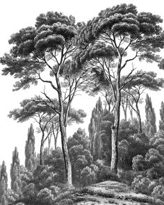 Papier peint panoramique Ananbô Pines and Cypress noir et blanc - wall. Tree Drawings Pencil, Landscape Pencil Drawings, Landscape Sketch, Landscape Art, Nature Sketch, Nature Drawing, Mural Painting, Mural Art, Jungle Drawing