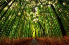 Bamboo Forest Saga Arashiyama, Japan