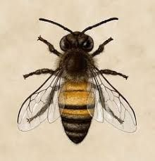 Image result for images vintage bee hives