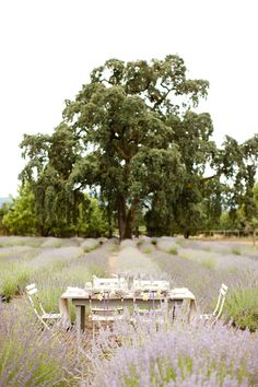 in loveee with this lavender farm ♥     http://dreamywhites.blogspot.com