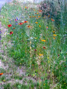 Last year's wildflowers in the xeriscaped yard. Water is crucial up here!