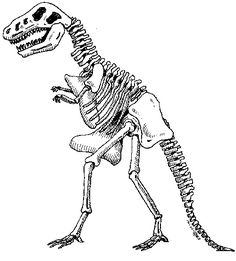 Printable Source Http Www Kids Dinosaurs Com Dinosaur Skeleton Html