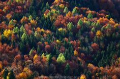 """Beautiful fall colors in the mountains surrounding Salzburg, Austria.  Image available for licensing.  See more of my work here:  <a href=""""http://www.oberschneider.com"""">www.oberschneider.com</a>  Facebook: <a href=""""http://www.facebook.com/Christoph.Oberschneider.Photography"""">Christoph Oberschneider Photography</a> follow me on <a href=""""http://instagram.com/coberschneider"""">Instagram</a>"""