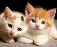 Two true friends.........................