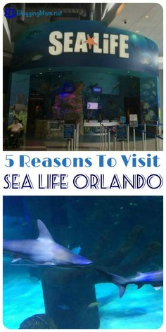 If you are looking for something to do with your family in Orlando, Florida, that is peaceful and relaxing, take